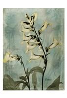 Golden Foxglove 6 Fine-Art Print