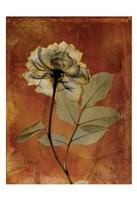 Rose 3 Fine-Art Print