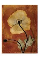 Iceland Poppy 5 Fine-Art Print