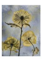 Three Gold 1 Fine-Art Print