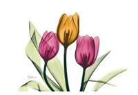 Tulip Fine-Art Print