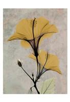 Hibiscus 4 Fine-Art Print