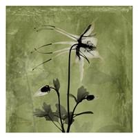 Columbine Green Fine-Art Print