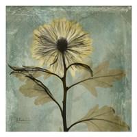 Chrysanthemum 2 - square Fine-Art Print