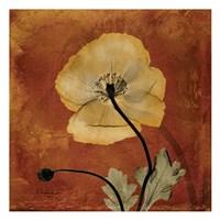 Iceland Poppy 10 Fine-Art Print