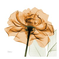 Copper Rose White Leaves Fine-Art Print