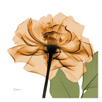 Copper Rose Green Leaves Fine-Art Print