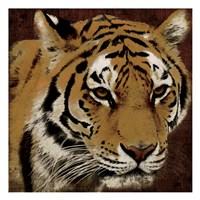 Tiger 2 Fine-Art Print