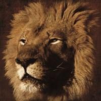 Lion 2 Fine-Art Print