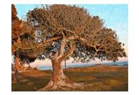 The One Tree Fine-Art Print