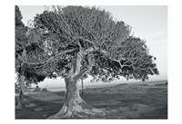 The One Tree BW Fine-Art Print