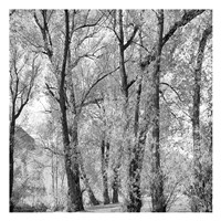 Woods III Fine-Art Print
