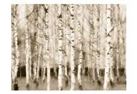 Sepia Timber Fine-Art Print
