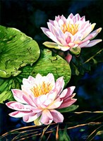 Waterlily Reflections Fine-Art Print