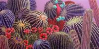 Barrel Cactus 1 Fine-Art Print