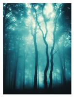 Blue Light Woods Fine-Art Print