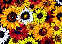 Sunflower Mix Fine-Art Print