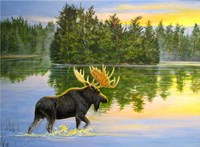 Wilderness Lake Moose Fine-Art Print
