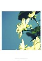 Summer Blossom I Fine-Art Print