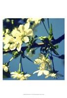 Summer Blossom II Fine-Art Print