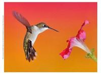 The Flower Dance I Fine-Art Print