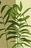 Painted Contrast Leaves II Fine-Art Print