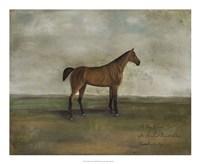 A Bay Hunter Fine-Art Print
