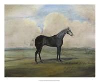 """""""""""The Kicker,"""""""" A Steel Grey Racehorse Fine-Art Print"""