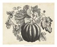 Sepia Squash I Fine-Art Print