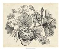 Sepia Squash II Fine-Art Print