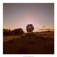 Sunset Field II Fine-Art Print