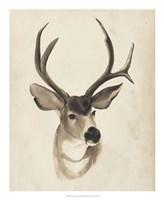 Watercolor Animal Study II Fine-Art Print