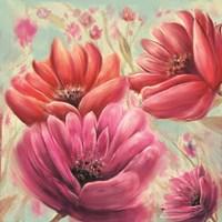 Pink Poppy Bloom Fine-Art Print