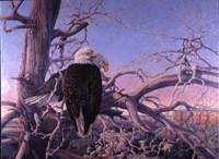 Bald Eagles Fine-Art Print
