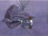 Pintail Reeds Fine-Art Print