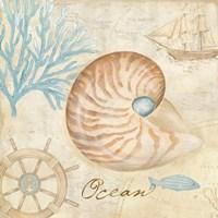 Nautical Shells III Framed Print