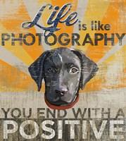 Dog days - Lab Pup Fine-Art Print