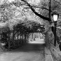 Central Park Pergola Fine-Art Print