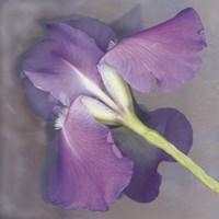 Parfum Fine-Art Print