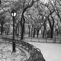 A Walk Through the Park Fine-Art Print
