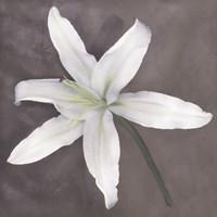 White Lily Fine-Art Print
