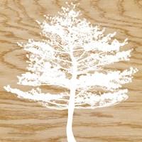 Frosty Tree Fine-Art Print
