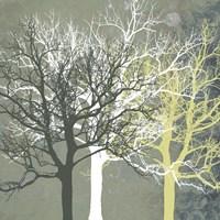 Tranquil Forest Fine-Art Print