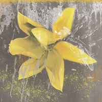 Tulip Fresco (yellow) Fine-Art Print