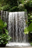 Singapore, National Orchid Garden, Waterfall Fine-Art Print