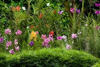 Flower Bed, National Orchid Garden, Singapore Fine-Art Print
