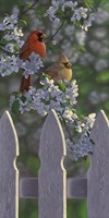 Cardinals and Apple Blossoms Fine-Art Print