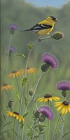 Thistle Gold Goldfinch Fine-Art Print