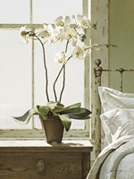 Orchids In The Window Fine-Art Print