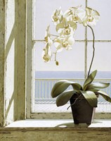 Flower In Window Fine-Art Print